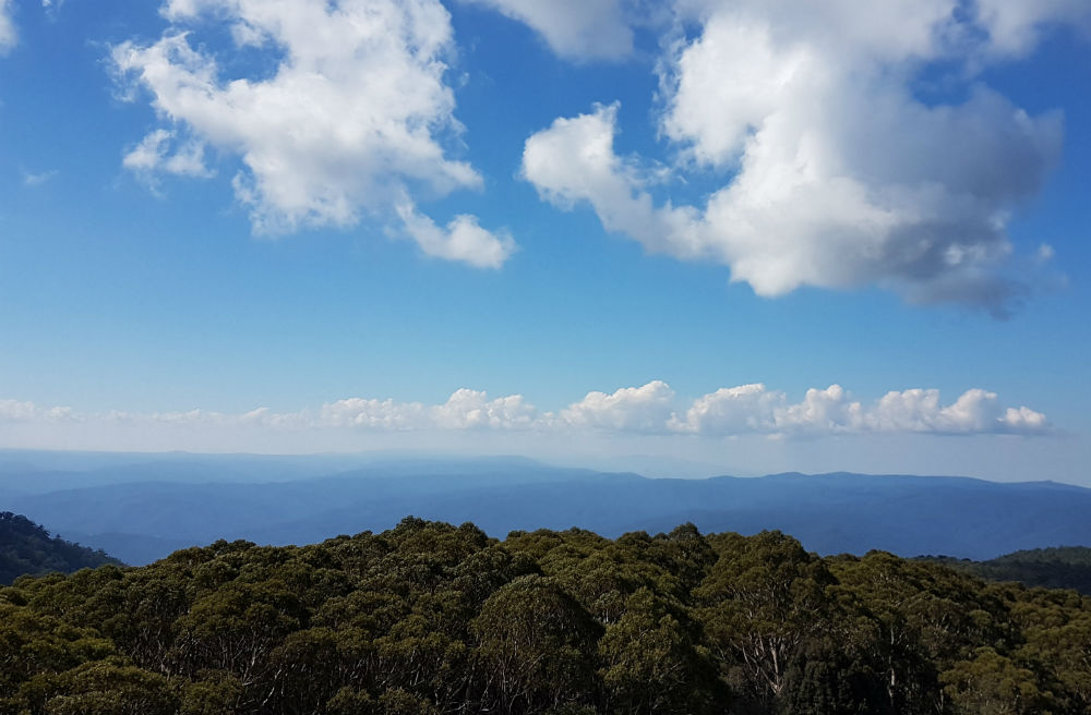 View looking over a sea of forest. The skies above are blue with some cotton wool ball clouds floating overhead.
