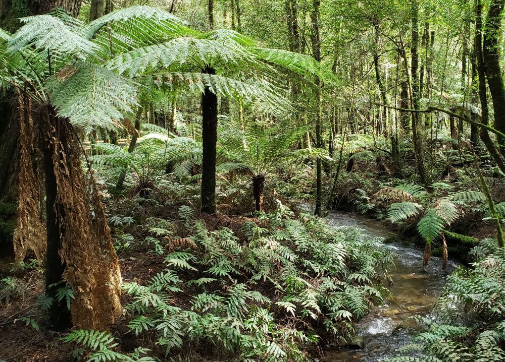 A creek winds through lush green rainforest