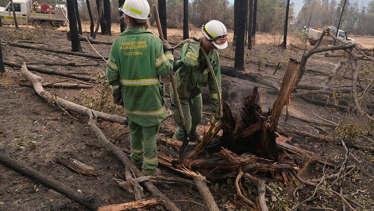 2 Forest Fire Management Victoria staff cleaning up tree debris