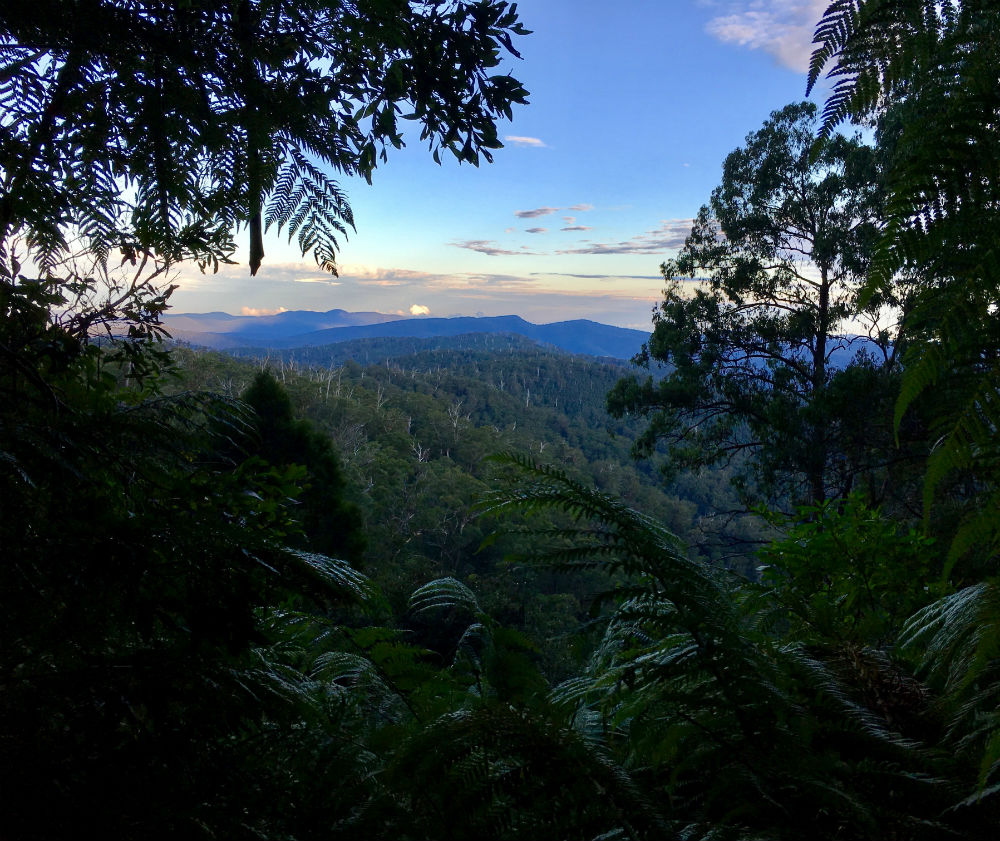 Waratah Lookout - a view over a forested valley framed by eucalyptus trees